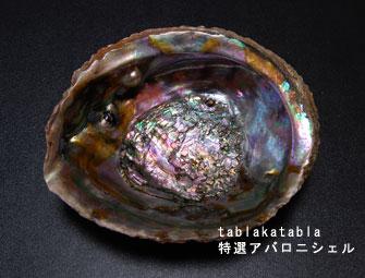 shell2.jpg
